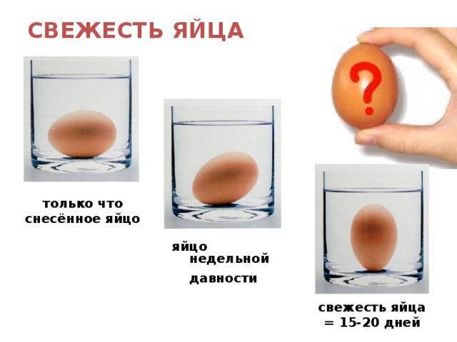 СВЕЖЕСТЬ ЯЙЦА   только что снесённое яйцо яйцо недельной давности  свежесть яйца = 15-20 дней