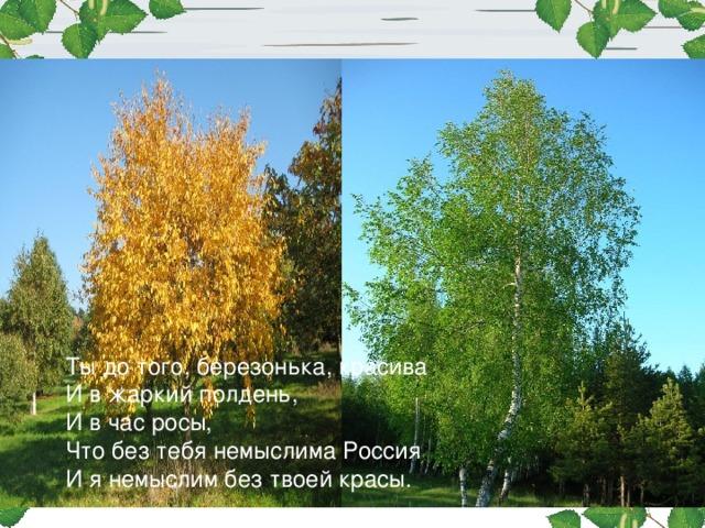 Ты до того, березонька, красива И в жаркий полдень, И в час росы, Что без тебя немыслима Россия И я немыслим без твоей красы.