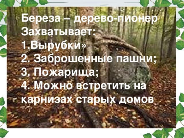 Береза – дерево-пионер Захватывает: 1.Вырубки» 2. Заброшенные пашни; 3. Пожарища; 4. Можно встретить на карнизах старых домов