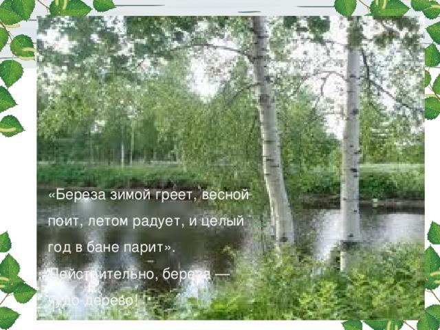 «Береза зимой греет, весной поит, летом радует, и целый год в бане парит». Действительно, береза — чудо-дерево!