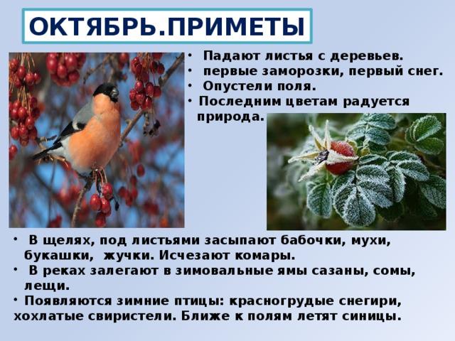 ОКТЯБРЬ.ПРИМЕТЫ  Падают листья с деревьев.  первые заморозки, первый снег.  Опустели поля. Последним цветам радуется  природа.  В щелях, под листьями засыпают бабочки, мухи, букашки, жучки. Исчезают комары.  В реках залегают в зимовальные ямы сазаны, сомы, лещи. Появляются зимние птицы: красногрудые снегири, хохлатые свиристели. Ближе к полям летят синицы.