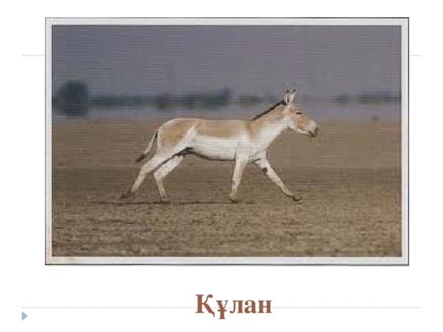 Құлан