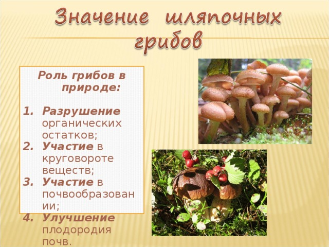Роль грибов в природе: