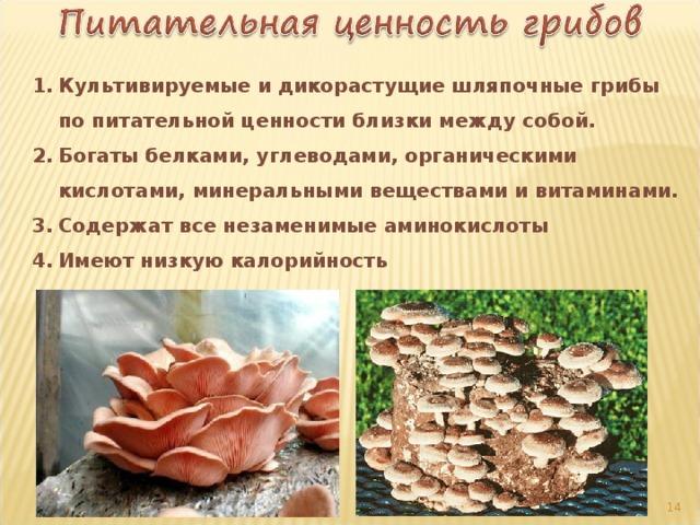 Культивируемые и дикорастущие шляпочные грибы по питательной ценности близки между собой. Богаты белками, углеводами, органическими кислотами, минеральными веществами и витаминами. Содержат все незаменимые аминокислоты Имеют низкую калорийность