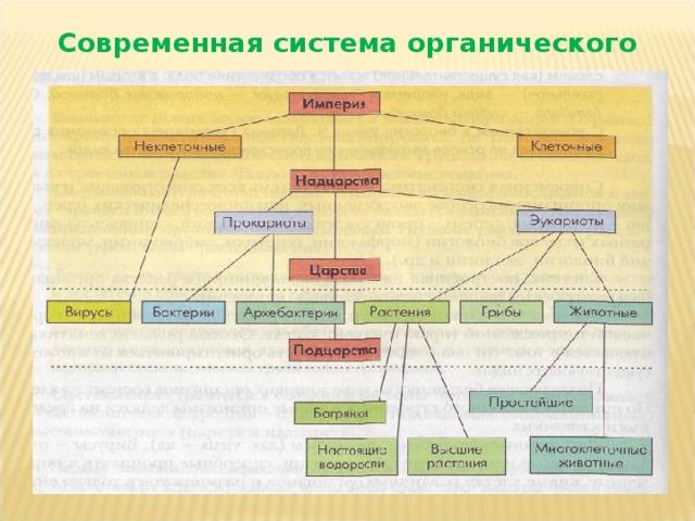 Современная система органического мира