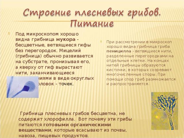 Под микроскопом хорошо видна грибница мукора - бесцветные, ветвящиеся гифы без перегородок. Мицелий (грибница) обычно развивается на субстрате, пронизывая его, а кверху от гиф вырастают нити, заканчивающиеся расширениями в виде округлых черных головок - т очек. При рассмотрении в микроскоп хорошо видна грибница гриба пеницилла - ветвящиеся нити, разделенные перегородками на отдельные клетки. На концах нитей грибницы образуются кисточки, в которых созревают многочисленные споры. При помощи спор гриб размножается и распространяется.