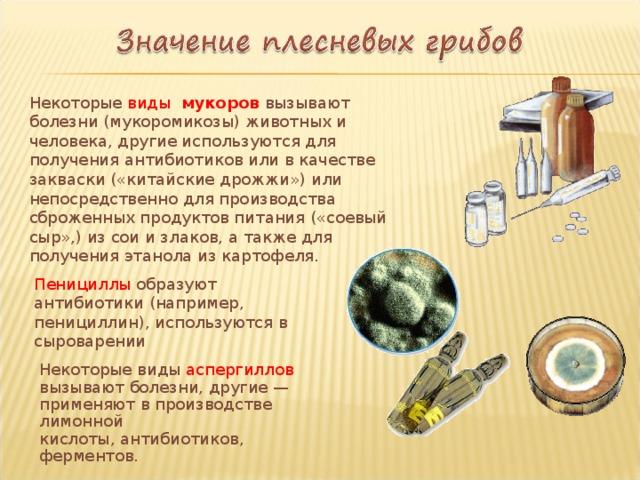 Некоторые виды мукоров вызывают болезни (мукоромикозы) животных и человека, другие используются для получения антибиотиков или в качестве закваски («китайские дрожжи») или непосредственно для производства сброженных продуктов питания («соевый сыр»,) из сои и злаков, а также для получения этанола из картофеля. Пенициллы образуют антибиотики (например, пенициллин), используются в сыроварении Некоторые виды аспергиллов вызывают болезни, другие — применяют в производстве лимонной кислоты, антибиотиков, ферментов.