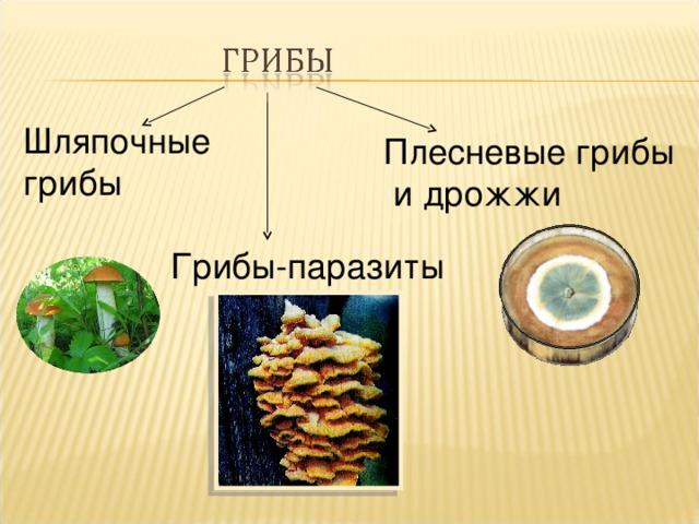 Шляпочные грибы Плесневые грибы  и дрожжи Грибы-паразиты