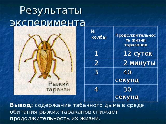 Результаты эксперимента  № колбы Продолжительность жизни тараканов  1  12 суток  2  2 минуты  3  40 секунд  4  30 секунд Вывод: содержание табачного дыма в среде обитания рыжих тараканов снижает продолжительность их жизни.