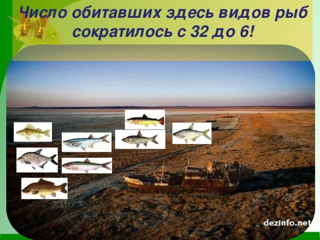 Число обитавших здесь видов рыб сократилось с 32 до 6!