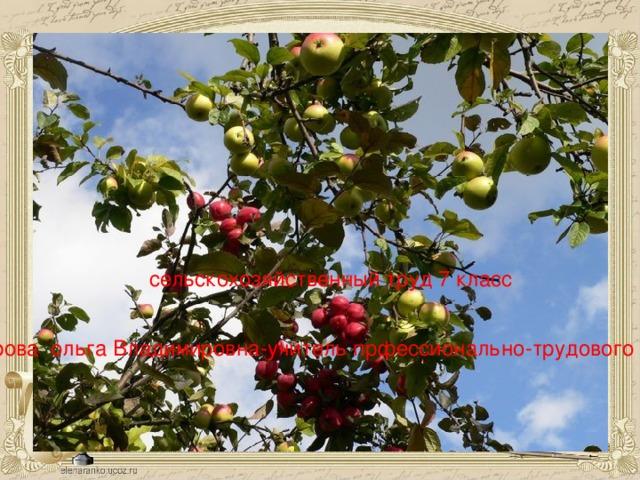 сельскохозяйственный труд 7 класс К руподерова ольга Владимировна-учитель прфессионально-трудового обучения