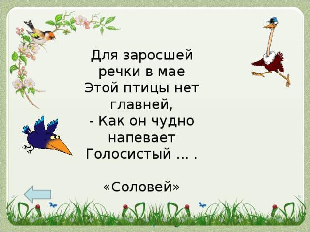 Для заросшей речки в мае  Этой птицы нет главней,  - Как он чудно напевает  Голосистый ... . «Соловей»