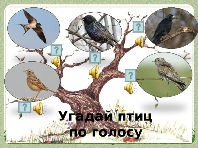 Угадай птиц по голосу