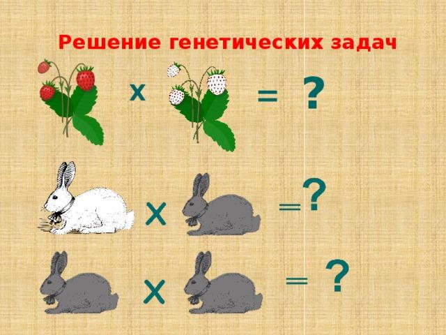 Решение генетических задач ? = Х