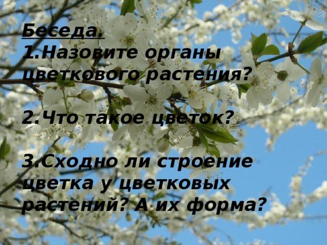 Беседа.  1.Назовите органы цветкового растения?   2.Что такое цветок?   3.Сходно ли строение цветка у цветковых растений? А их форма?