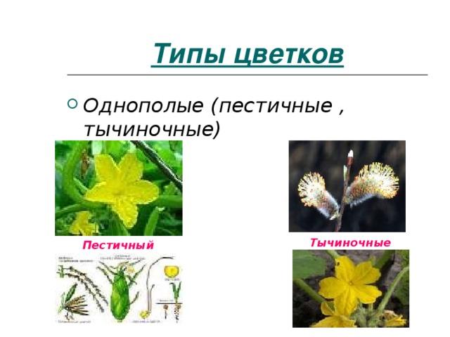 Типы цветков Однополые (пестичные , тычиночные) Тычиночные Пестичный