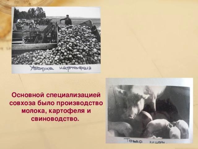 Основной специализацией совхоза было производство молока, картофеля и свиноводство.