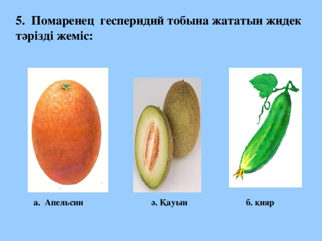 5. Помаренец гесперидий тобына жататын жидек тәрізді жеміс: а. Апельсин ә. Қауын б. қияр
