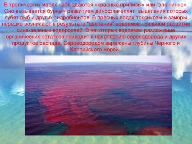 В тропических морях наблюдаются «красные приливы» или