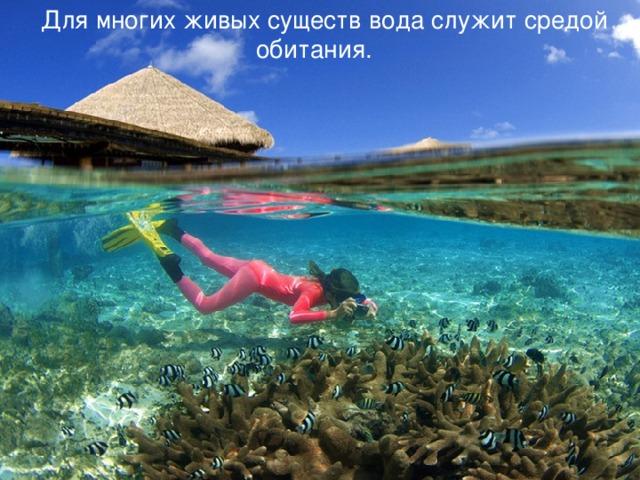 Для многих живых существ вода служит средой обитания.