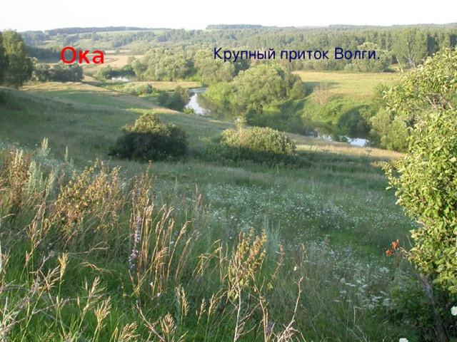 Ока Крупный приток Волги.