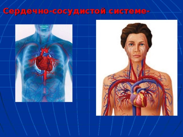 Сердечно-сосудистой системе-
