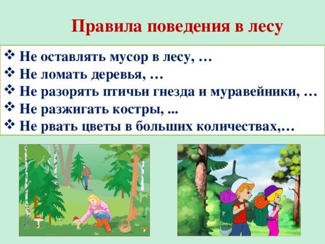 правила поведения в лесу фото мотивационное изображение