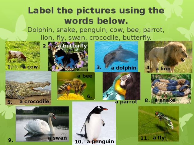 Label the pictures using the words below.  Dolphin, snake, penguin, cow, bee, parrot, lion, fly, swan, crocodile, butterfly. a butterfly 2. 1. a cow 3. 4. a dolphin a lion a bee 7. 6. a snake 8. a crocodile a parrot 5. a fly a swan 11. 9. a penguin 10.