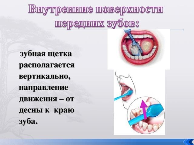 зубная щетка располагается вертикально, направление движения – от десны к краю зуба.