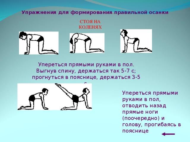 Упражнения для формирования правильной осанки СТ ОЯ НА КОЛЕНЯХ Упереться прямыми руками в пол. Выгнув спину, держаться так 5-7 с; прогнуться в пояснице, держаться 3-5 с.  Упереться прямыми руками в пол, отводить назад прямые ноги (поочередно) и голову, прогибаясь в пояснице