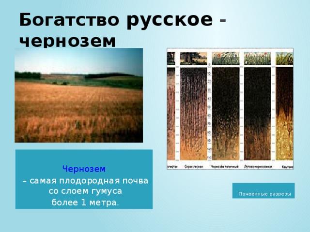 Богатство  русское - чернозем Чернозем – самая плодородная почва со слоем гумуса более 1 метра.  Почвенные разрезы