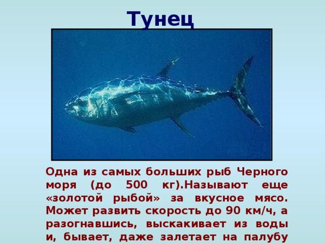 Обитатели черного моря доклад 9201
