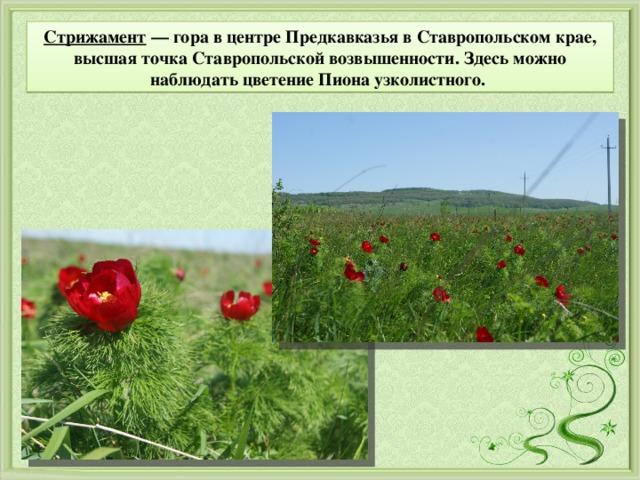 Стрижамент — гора в центре Предкавказья вСтавропольском крае, высшая точкаСтавропольской возвышенности. Здесь можно наблюдать цветение Пиона узколистного.