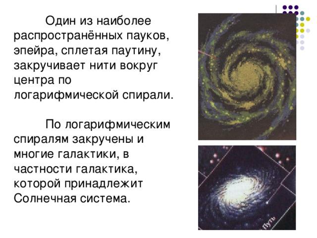 Один из наиболее распространённых пауков, эпейра, сплетая паутину, закручивает нити вокруг центра по логарифмической спирали.  По логарифмическим спиралям закручены и многие галактики, в частности галактика, которой принадлежит Солнечная система.