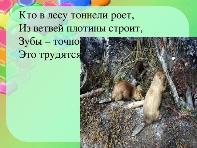Кто в лесу тоннели роет, Из ветвей плотины строит, Зубы – точно топоры. Это трудятся …