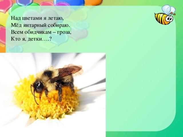 Над цветами я летаю,  Мёд янтарный собираю.  Всем обидчикам – гроза,  Кто я, детки….?