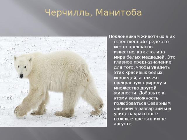 Черчилль, Манитоба   Поклонникам животных в их естественной среде это место прекрасно известно, как столица мира белых медведей. Это главное предназначение для того, чтобы увидеть этих красивых белых медведей, а так же прекрасную природу и множество другой живности. Добавьте к этому возможность полюбоваться Северным сиянием в разгар зимы и увидеть красочные полевые цветы в июне-августе.