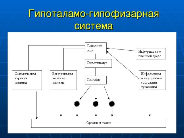 Гипоталамо-гипофизарная система