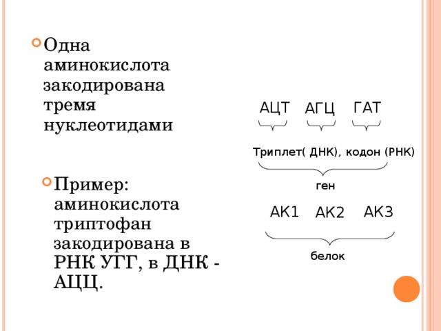 Одна аминокислота закодирована тремя нуклеотидами АЦТ ГАТ АГЦ Триплет( ДНК), кодон (РНК) Пример: аминокислота триптофан закодирована в РНК УГГ, в ДНК - АЦЦ.