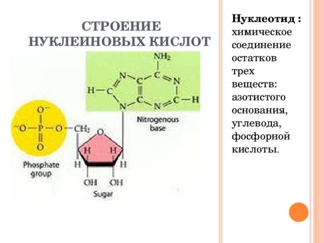 СТРОЕНИЕ НУКЛЕИНОВЫХ КИСЛОТ Нуклеотид : химическое соединение остатков трех веществ: азотистого основания, углевода, фосфорной кислоты .