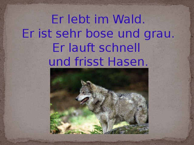 Er lebt im Wald. Er ist sehr bose und grau. Er lauft schnell und frisst Hasen.