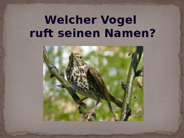 Welcher Vogel ruft seinen Namen?