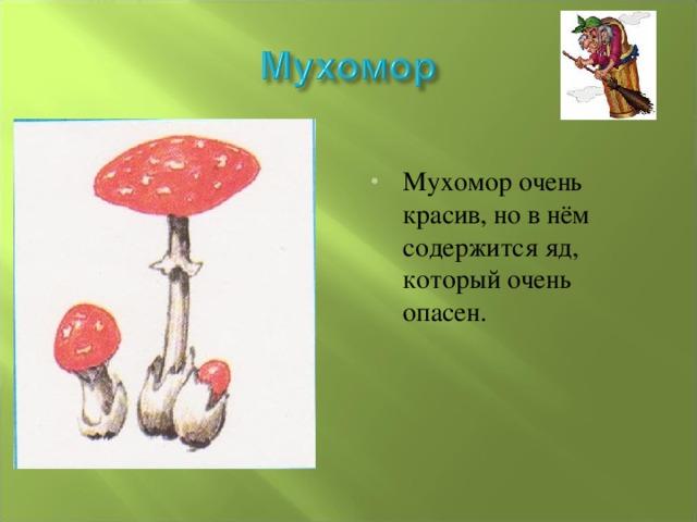 Мухомор очень красив, но в нём содержится яд, который очень опасен.