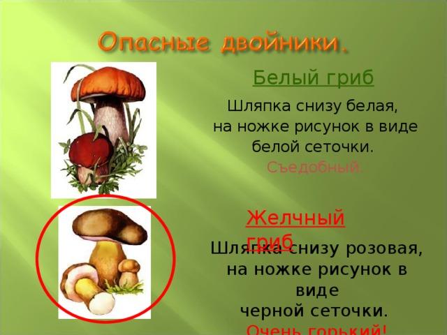Белый гриб Шляпка снизу белая, на ножке рисунок в виде белой сеточки. Съедобный.   Желчный гриб Шляпка снизу розовая, на ножке рисунок в виде черной сеточки. Очень горький!