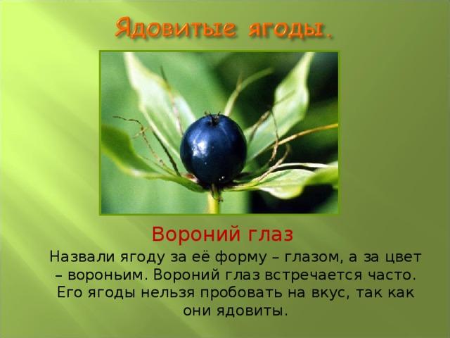 Вороний глаз Назвали ягоду за её форму – глазом, а за цвет – вороньим. Вороний глаз встречается часто. Его ягоды нельзя пробовать на вкус, так как они ядовиты.