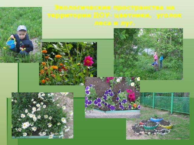 Экологические пространства на территории ДОУ- цветники, уголок леса и луг.