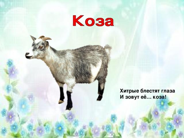 Хитрые блестят глаза  И зовут её… коза!