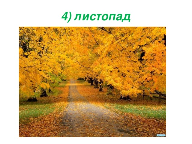 4) листопад