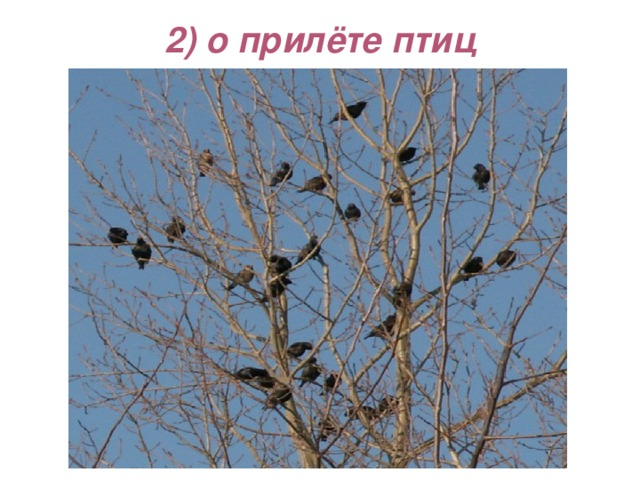 2) о прилёте птиц
