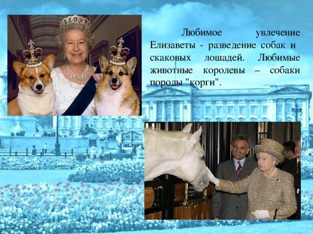 Любимое увлечение Елизаветы - разведение собак и скаковых лошадей. Любимые животные королевы – собаки породы